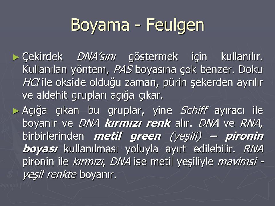 Boyama - Feulgen