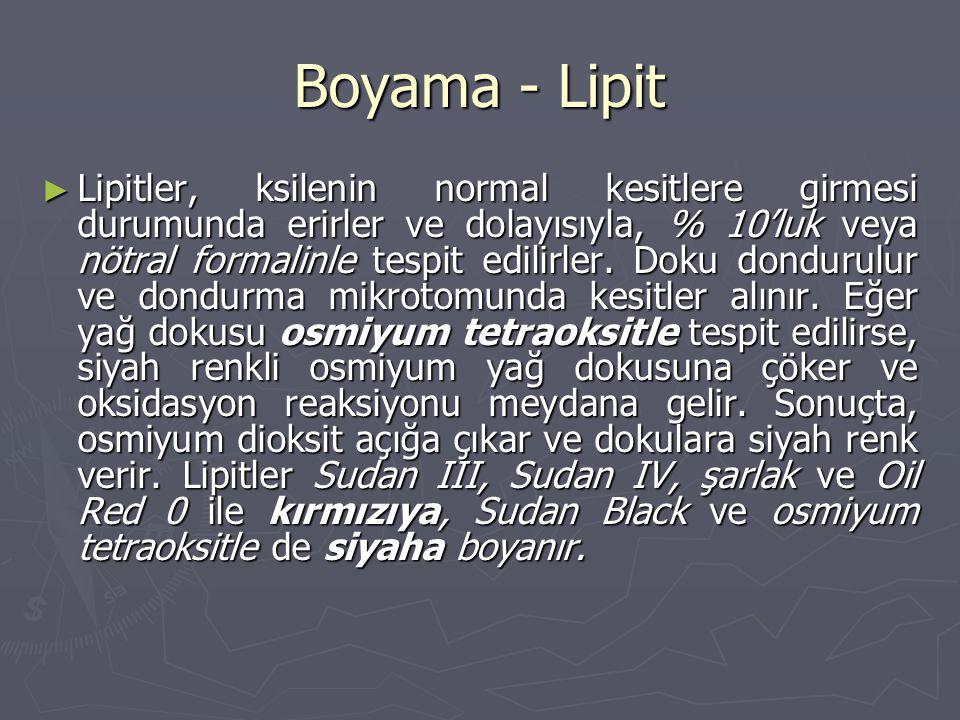 Boyama - Lipit
