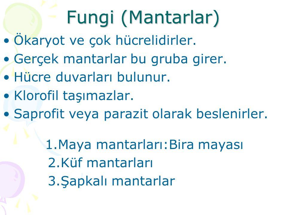 Fungi (Mantarlar) Ökaryot ve çok hücrelidirler.