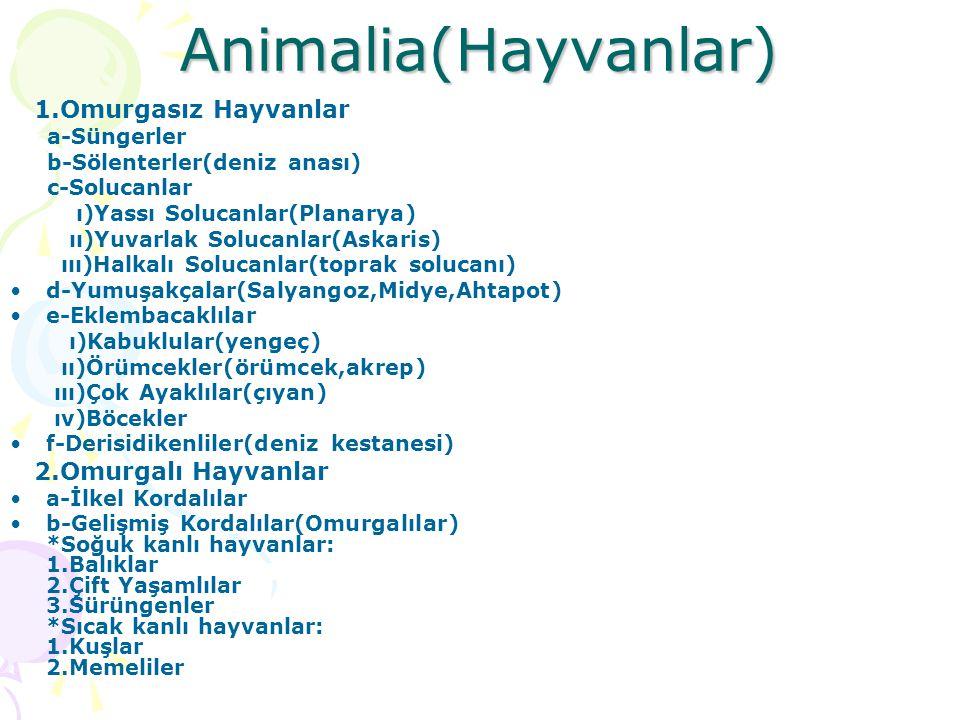 Animalia(Hayvanlar) 1.Omurgasız Hayvanlar 2.Omurgalı Hayvanlar