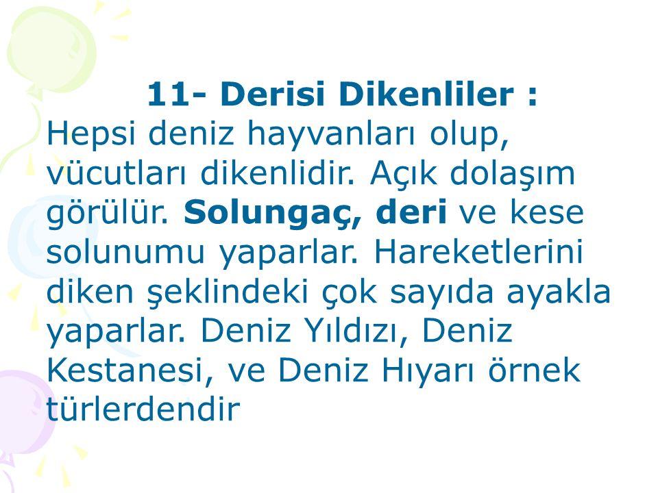11- Derisi Dikenliler :