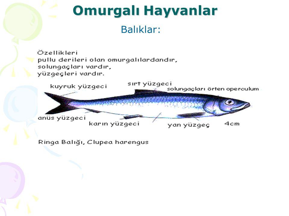 Omurgalı Hayvanlar Balıklar: