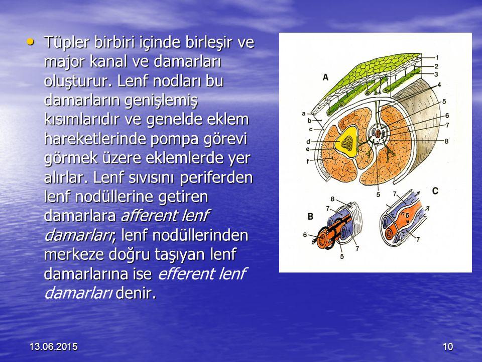 Tüpler birbiri içinde birleşir ve major kanal ve damarları oluşturur