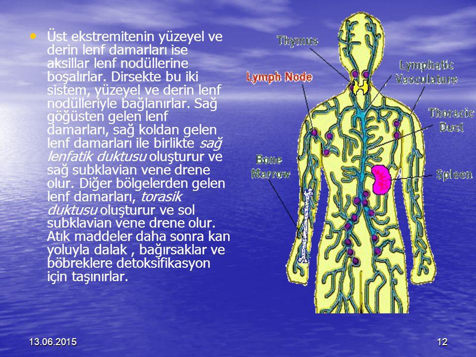 Üst ekstremitenin yüzeyel ve derin lenf damarları ise aksillar lenf nodüllerine boşalırlar. Dirsekte bu iki sistem, yüzeyel ve derin lenf nodülleriyle bağlanırlar. Sağ göğüsten gelen lenf damarları, sağ koldan gelen lenf damarları ile birlikte sağ lenfatik duktusu oluşturur ve sağ subklavian vene drene olur. Diğer bölgelerden gelen lenf damarları, torasik duktusu oluşturur ve sol subklavian vene drene olur. Atık maddeler daha sonra kan yoluyla dalak , bağırsaklar ve böbreklere detoksifikasyon için taşınırlar.