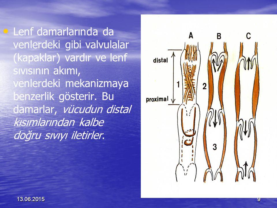Lenf damarlarında da venlerdeki gibi valvulalar (kapaklar) vardır ve lenf sıvısının akımı, venlerdeki mekanizmaya benzerlik gösterir. Bu damarlar, vücudun distal kısımlarından kalbe doğru sıvıyı iletirler.