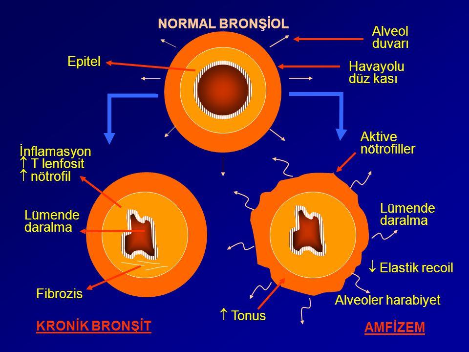 NORMAL BRONŞİOL Alveol. duvarı. Epitel. Havayolu. düz kası. Aktive. nötrofiller. İnflamasyon.