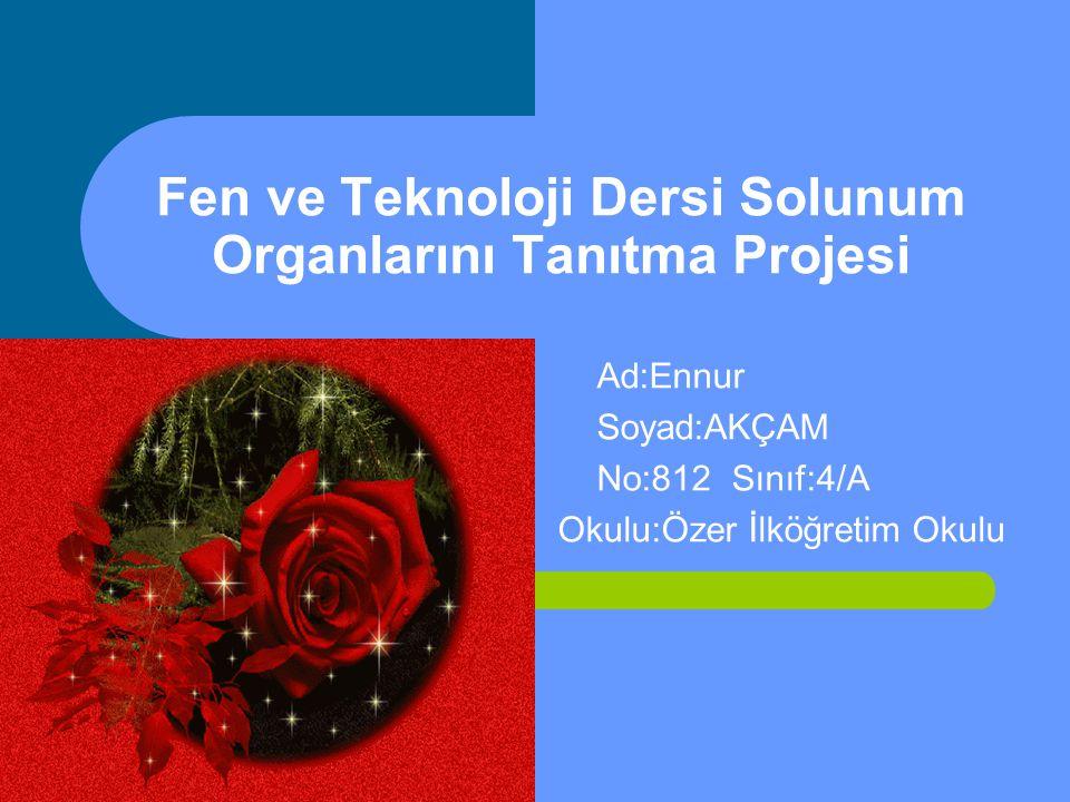 Fen ve Teknoloji Dersi Solunum Organlarını Tanıtma Projesi