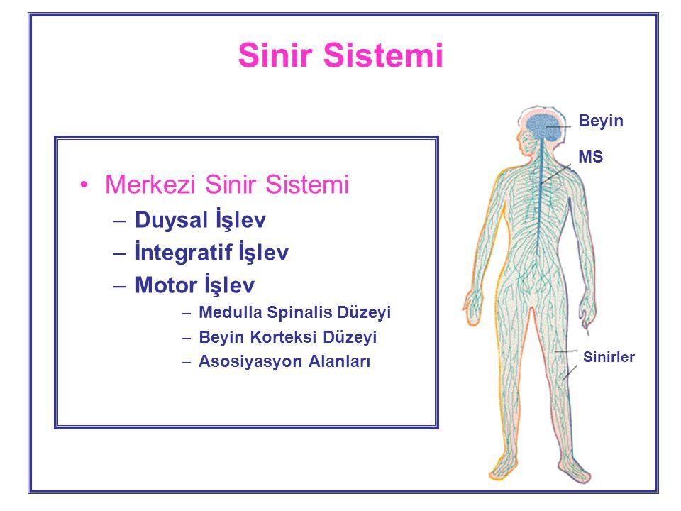 Sinir Sistemi Merkezi Sinir Sistemi Duysal İşlev İntegratif İşlev