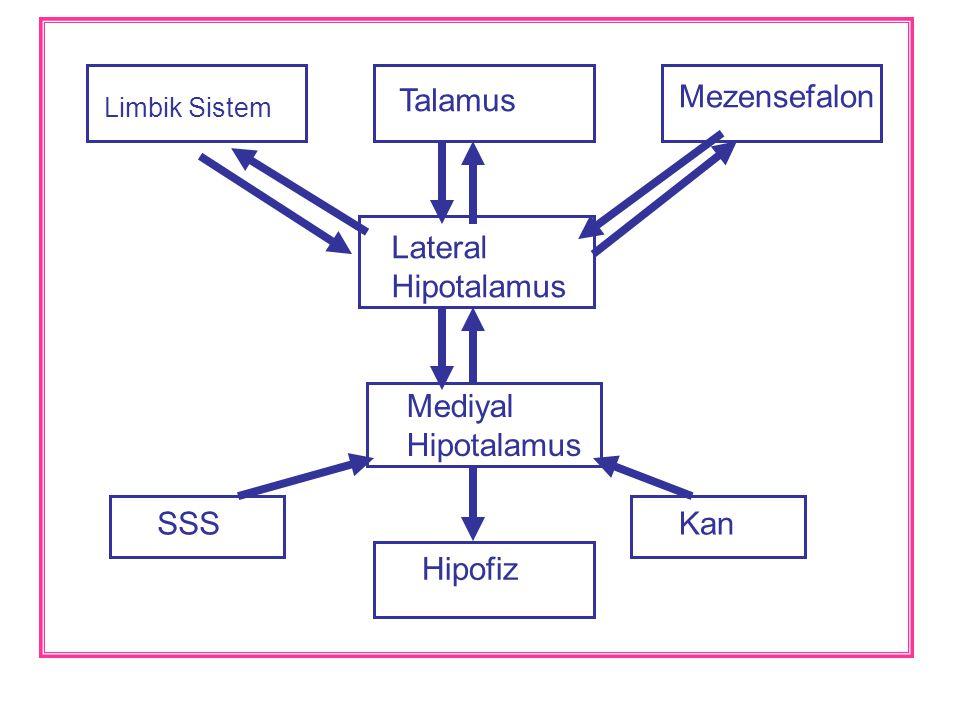 Talamus Mezensefalon Lateral Hipotalamus Mediyal Hipotalamus SSS Kan