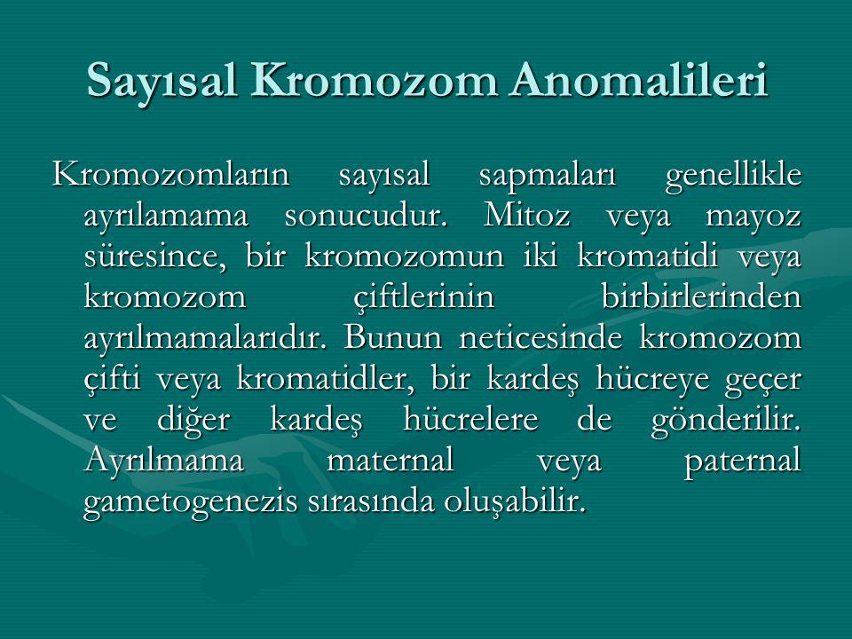 Sayısal Kromozom Anomalileri