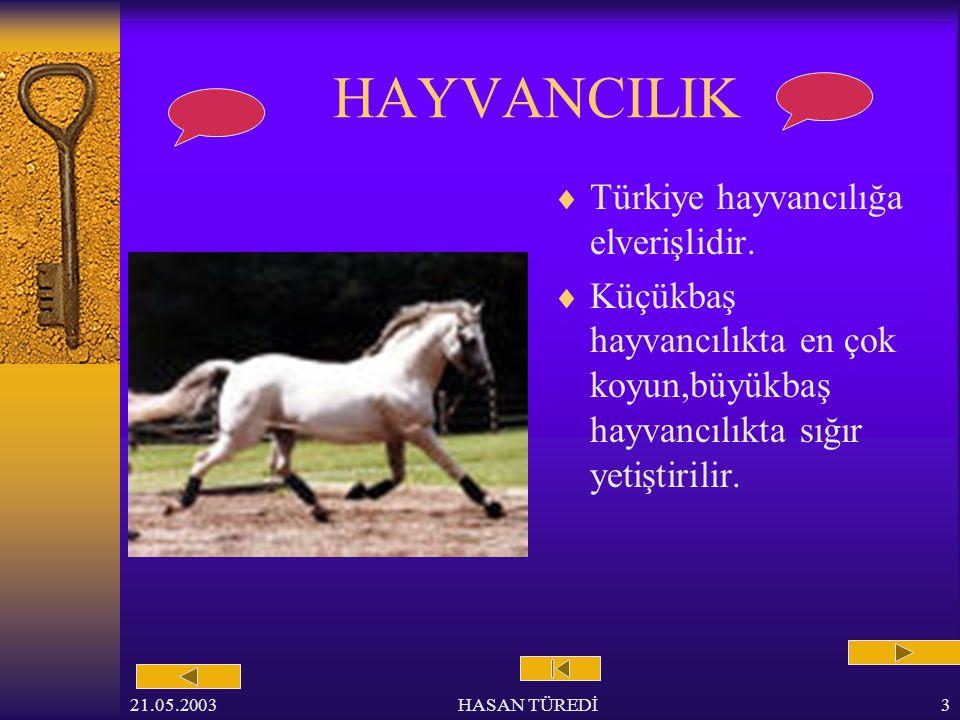 HAYVANCILIK Türkiye hayvancılığa elverişlidir.