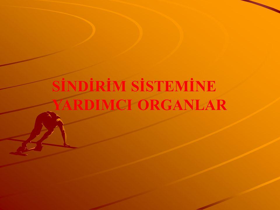 SİNDİRİM SİSTEMİNE YARDIMCI ORGANLAR