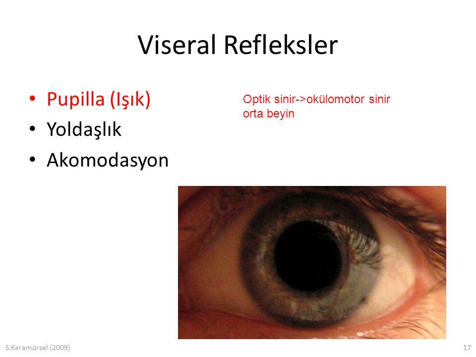 Viseral Refleksler Pupilla (Işık) Yoldaşlık Akomodasyon