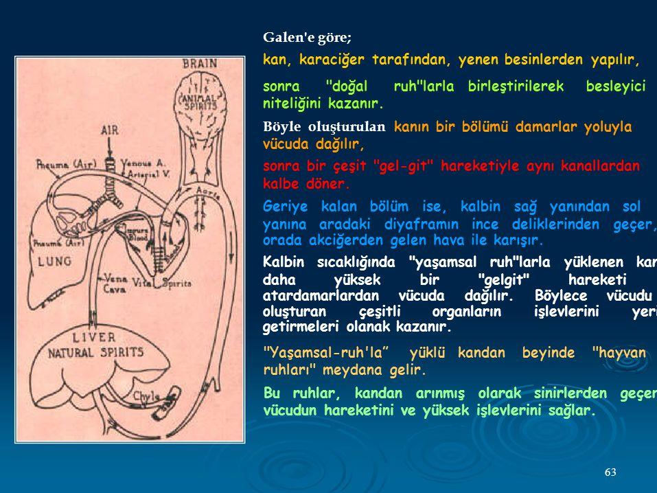 Galen e göre; kan, karaciğer tarafından, yenen besinlerden yapılır, sonra doğal ruh larla. niteliğini kazanır.