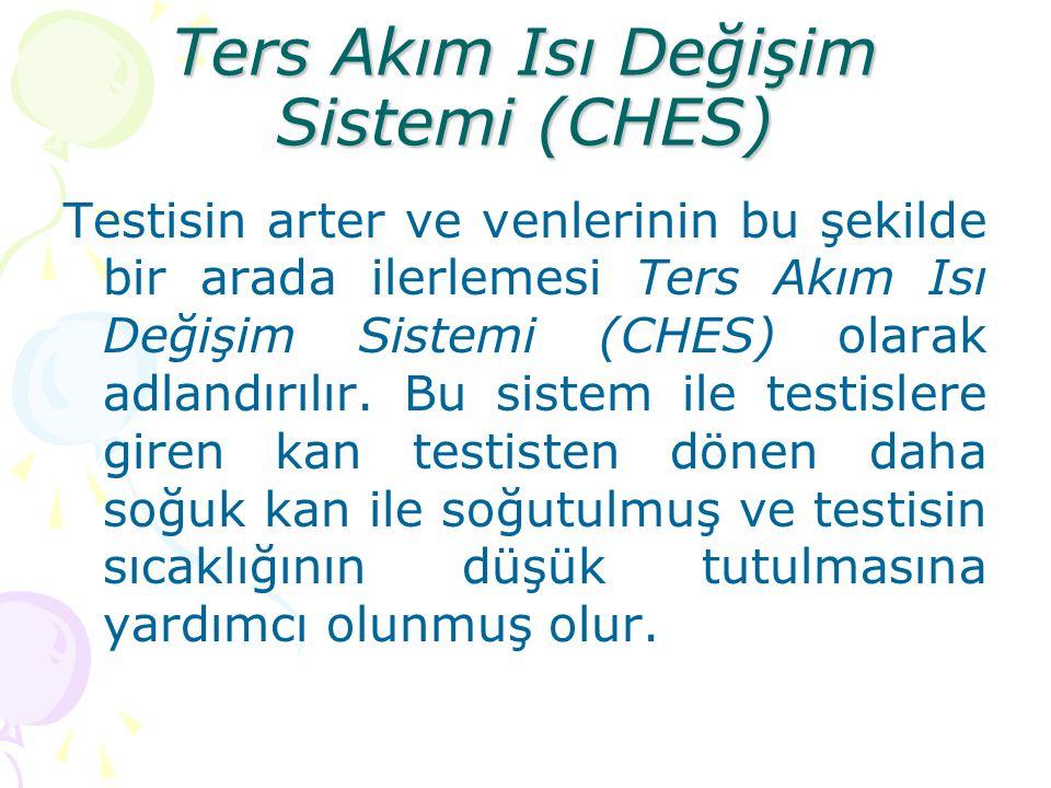 Ters Akım Isı Değişim Sistemi (CHES)