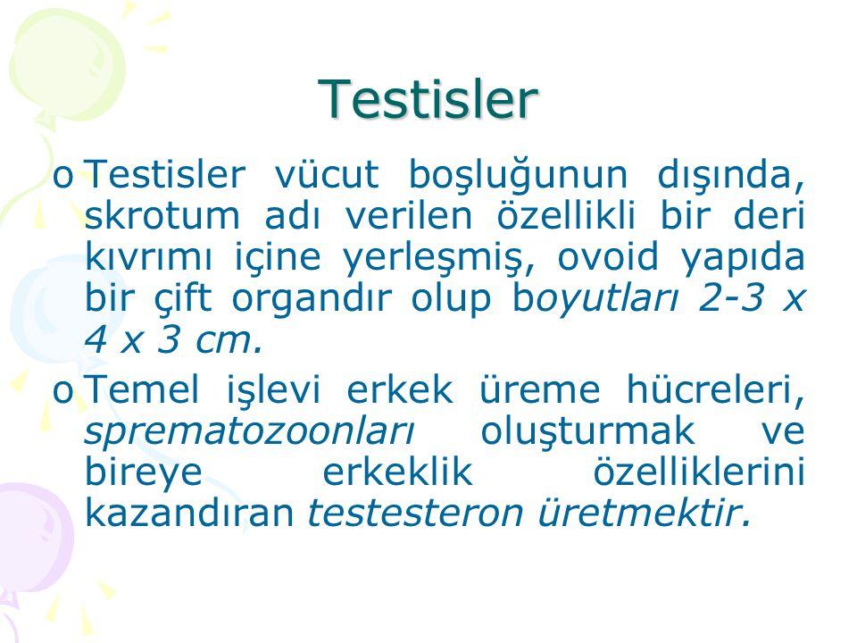 Testisler