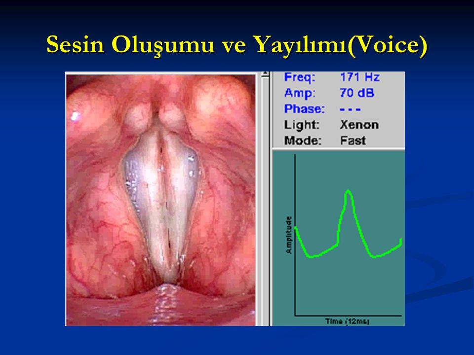 Sesin Oluşumu ve Yayılımı(Voice)