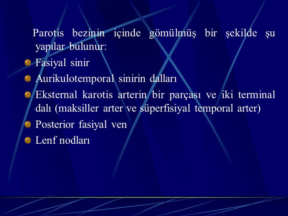 Parotis bezinin içinde gömülmüş bir şekilde şu yapılar bulunur: