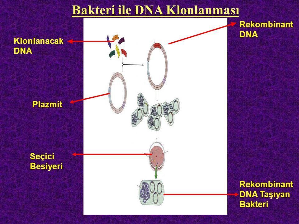 Bakteri ile DNA Klonlanması