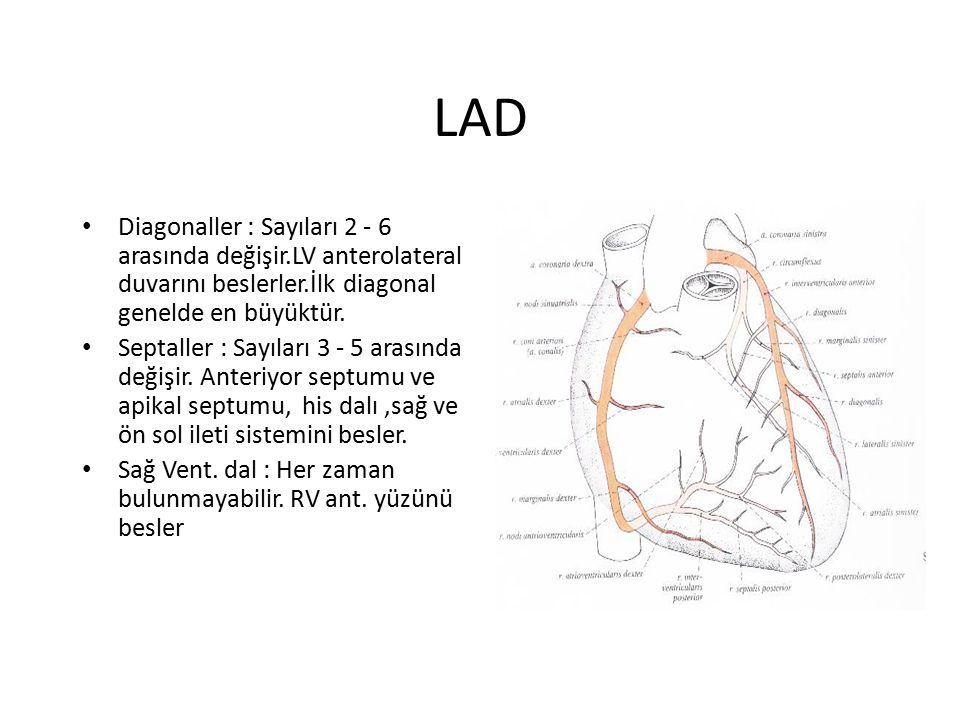 LAD Diagonaller : Sayıları 2 - 6 arasında değişir.LV anterolateral duvarını beslerler.İlk diagonal genelde en büyüktür.