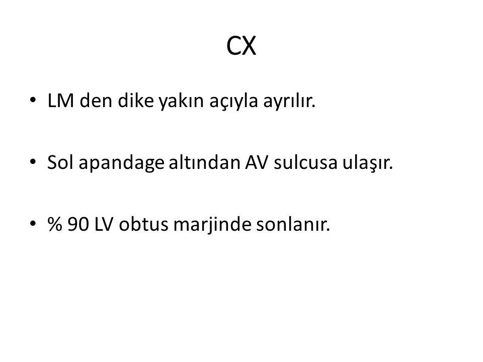 CX LM den dike yakın açıyla ayrılır.