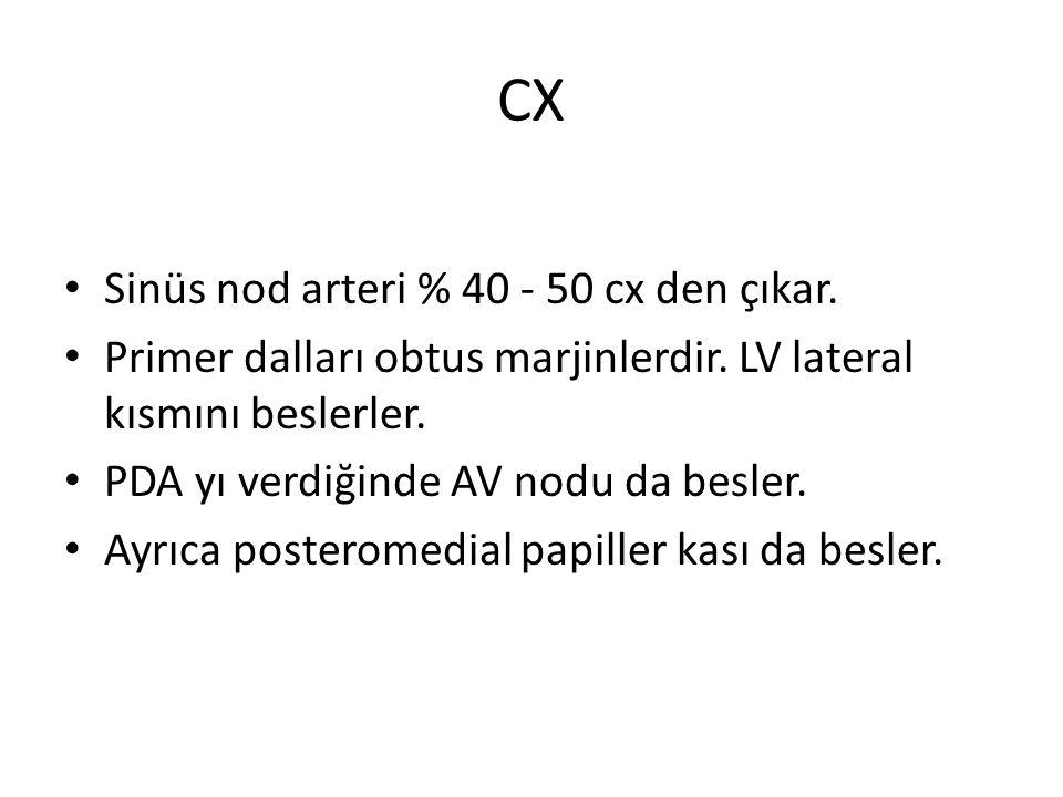 CX Sinüs nod arteri % 40 - 50 cx den çıkar.