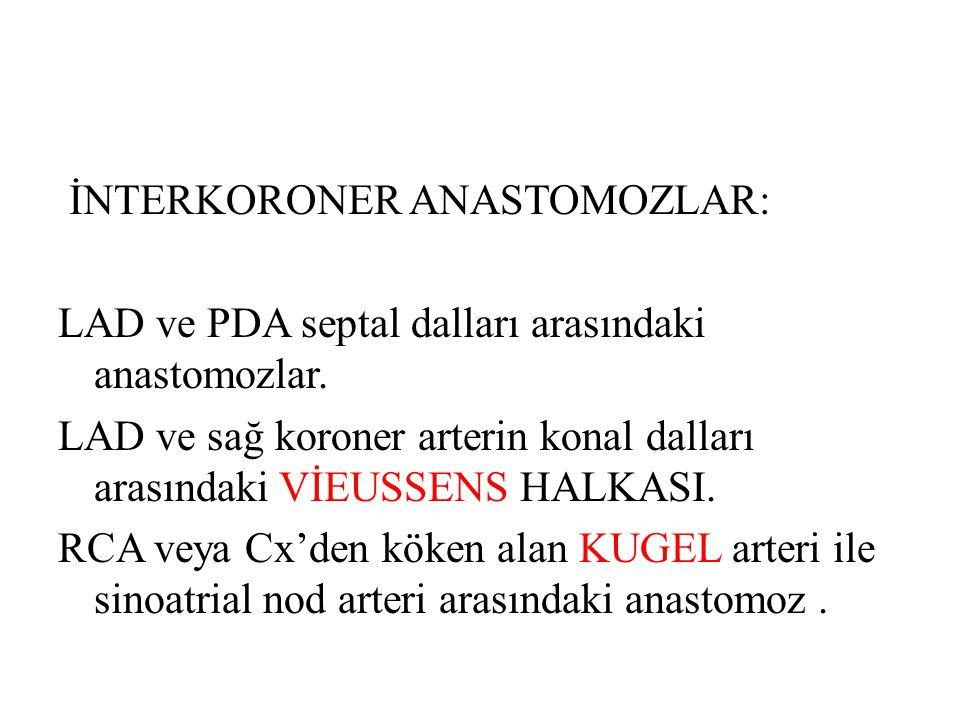 İNTERKORONER ANASTOMOZLAR: LAD ve PDA septal dalları arasındaki anastomozlar.