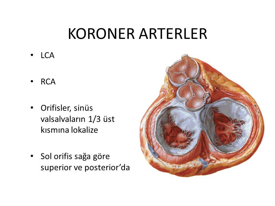 KORONER ARTERLER LCA RCA