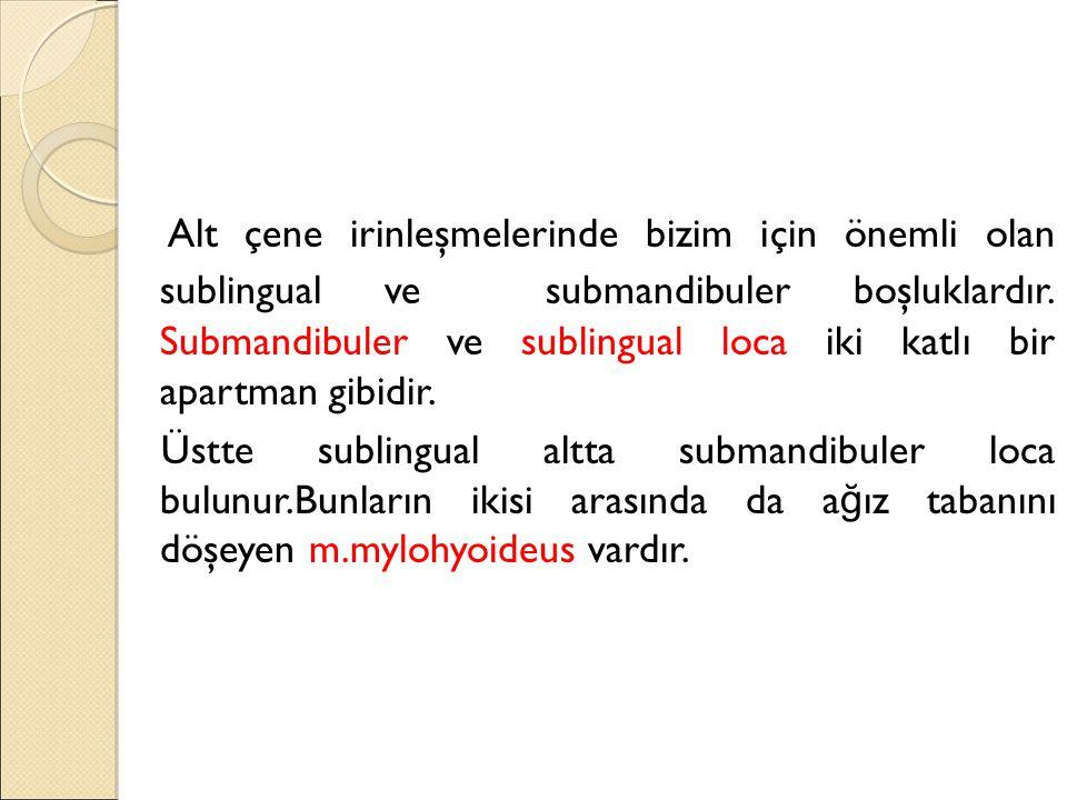 Alt çene irinleşmelerinde bizim için önemli olan sublingual ve submandibuler boşluklardır. Submandibuler ve sublingual loca iki katlı bir apartman gibidir.