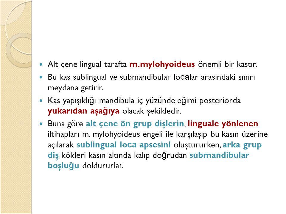 Alt çene lingual tarafta m.mylohyoideus önemli bir kastır.