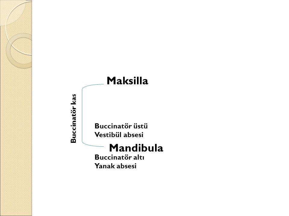 Maksilla Mandibula Buccinatör kas Buccinatör üstü Vestibül absesi