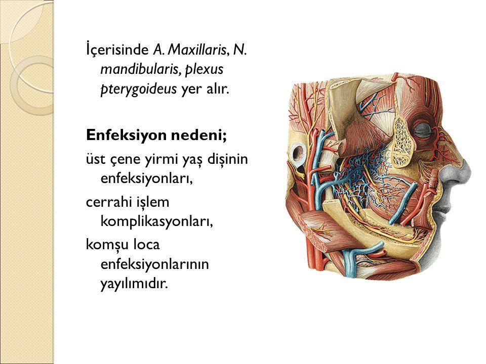 İçerisinde A. Maxillaris, N. mandibularis, plexus pterygoideus yer alır.