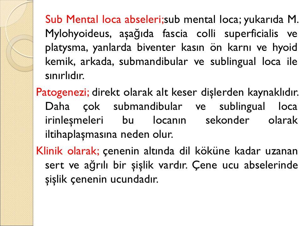 Sub Mental loca abseleri;sub mental loca; yukarıda M