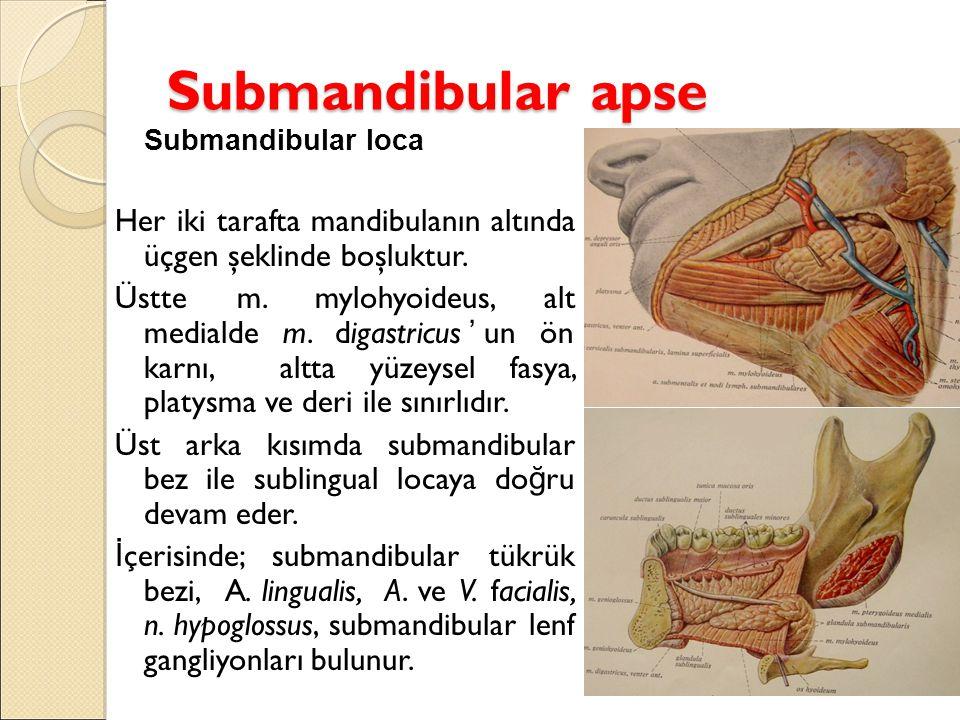 Submandibular apse Submandibular loca. Her iki tarafta mandibulanın altında üçgen şeklinde boşluktur.
