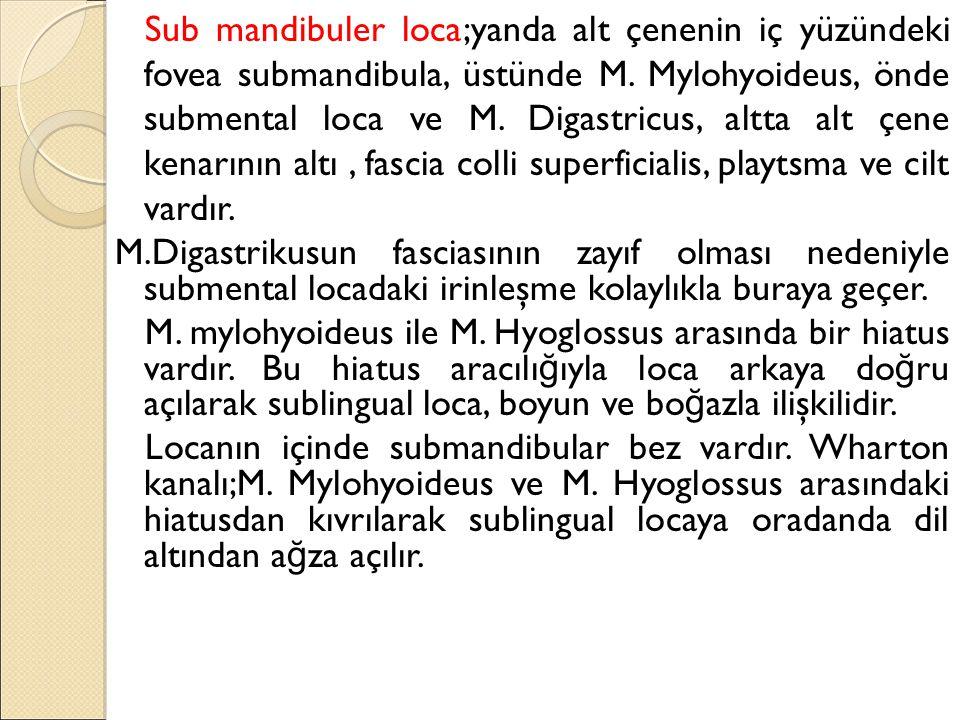 Sub mandibuler loca;yanda alt çenenin iç yüzündeki fovea submandibula, üstünde M.