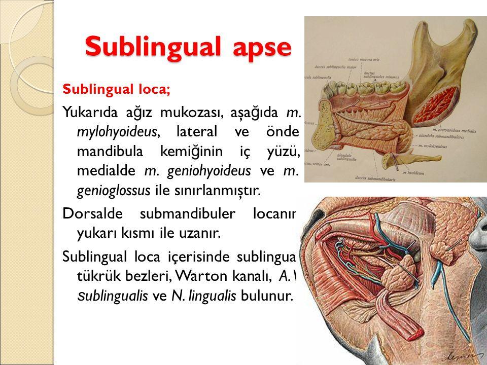 Sublingual apse Sublingual loca;