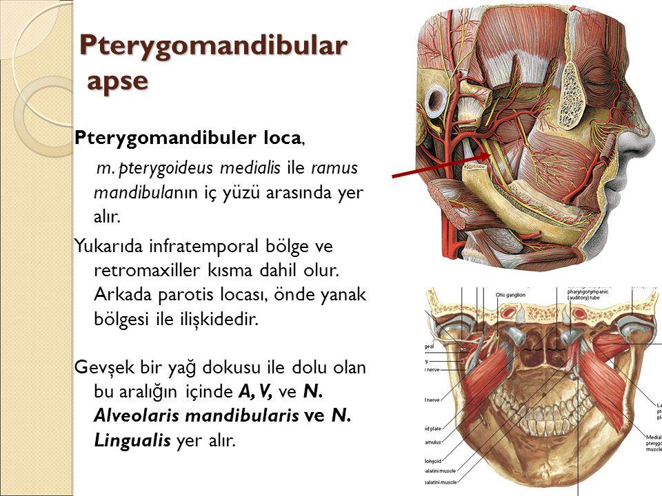Pterygomandibular apse