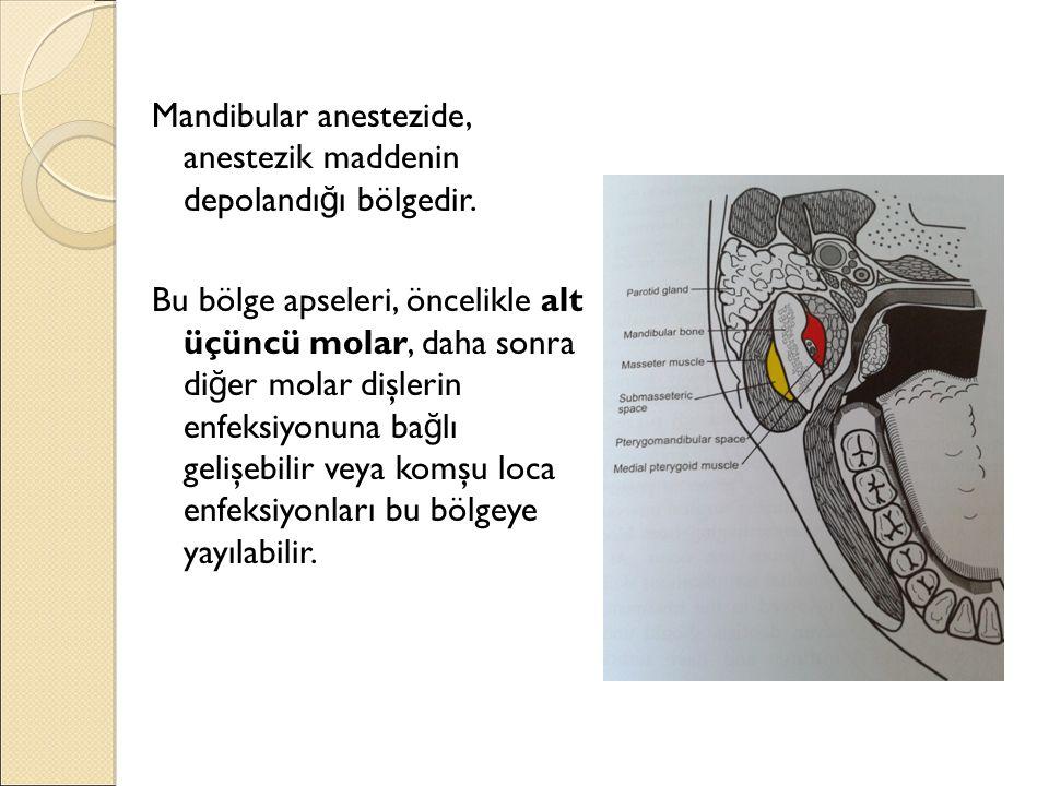 Mandibular anestezide, anestezik maddenin depolandığı bölgedir.