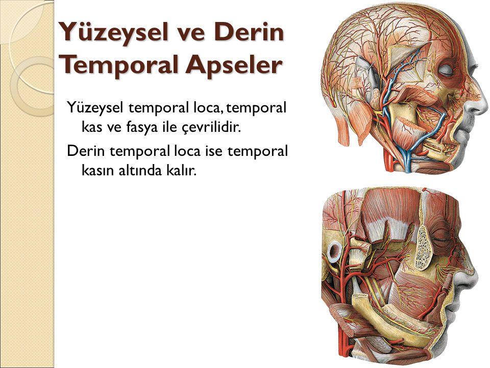 Yüzeysel ve Derin Temporal Apseler