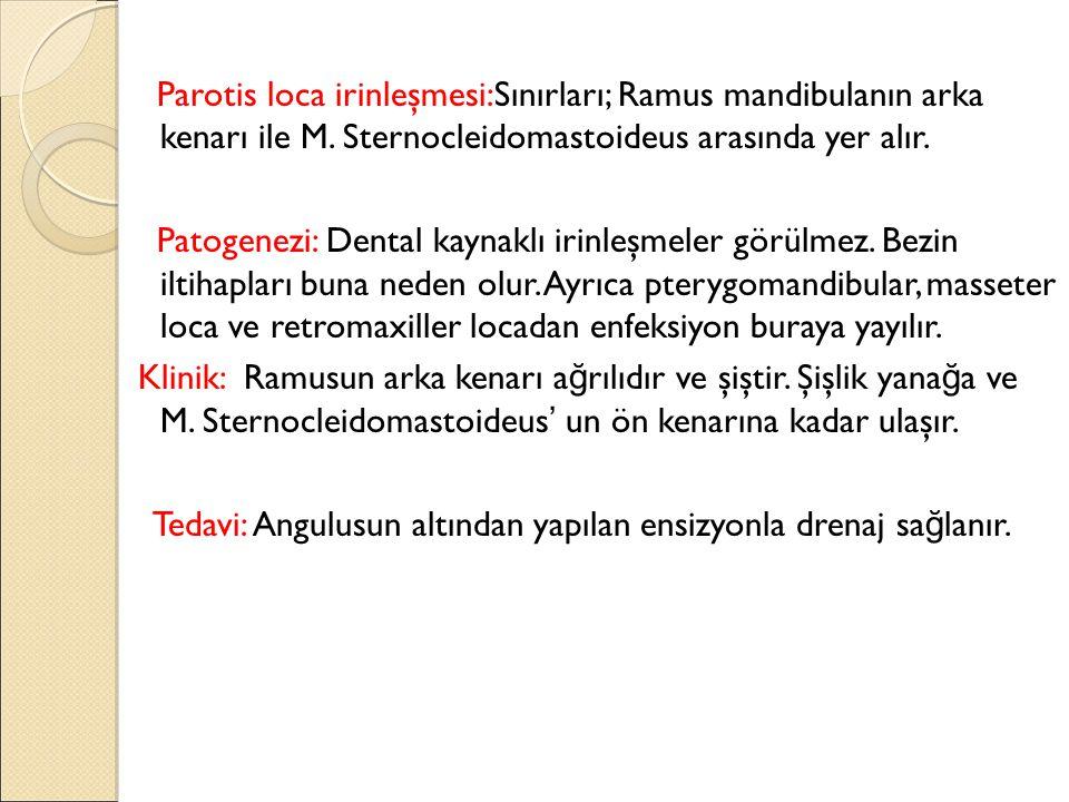 Parotis loca irinleşmesi:Sınırları; Ramus mandibulanın arka kenarı ile M. Sternocleidomastoideus arasında yer alır.