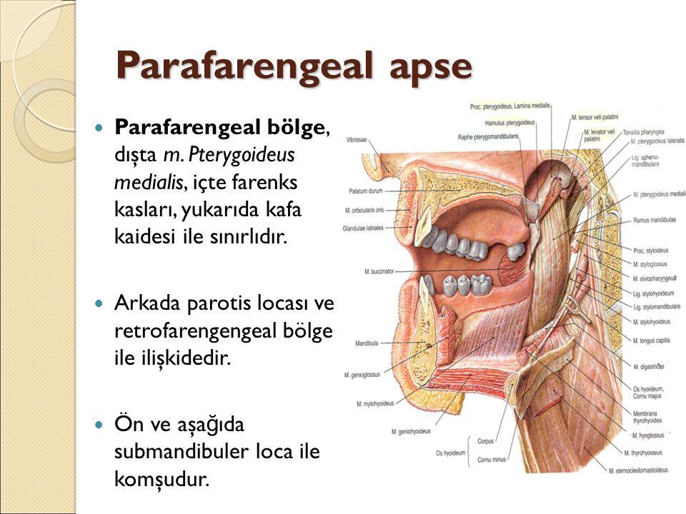 Parafarengeal apse Parafarengeal bölge, dışta m. Pterygoideus medialis, içte farenks kasları, yukarıda kafa kaidesi ile sınırlıdır.
