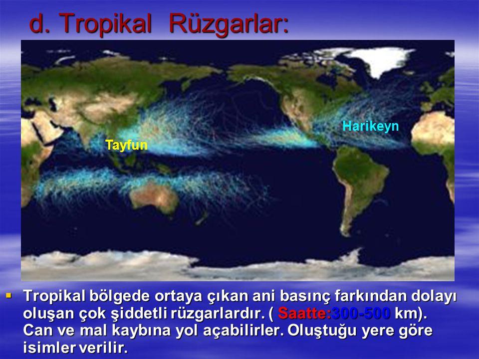 d. Tropikal Rüzgarlar: Harikeyn. Tayfun.