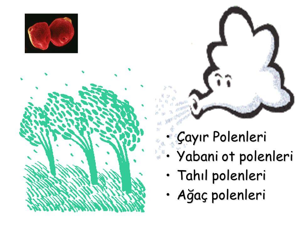Çayır Polenleri Yabani ot polenleri Tahıl polenleri Ağaç polenleri
