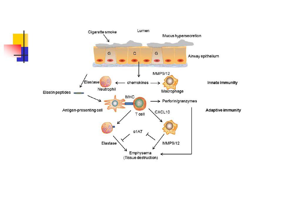 İnflamatuar hücrelerin toplanması, kemokin ve sitokinlerin salınımı, proteolitik enzimlerin elastin yıkımına neden olması,elastin peptdilerin dendritik hücreler tarafından fagosite edilmesi ve antijen sunumu ile T hücre aktivasyonu ve T hücre aktivasyonunun uzaması ile dokuyu yıkan proteolitik enzimlerin açığa çıkması amfizem gelişimine yol açıyor.