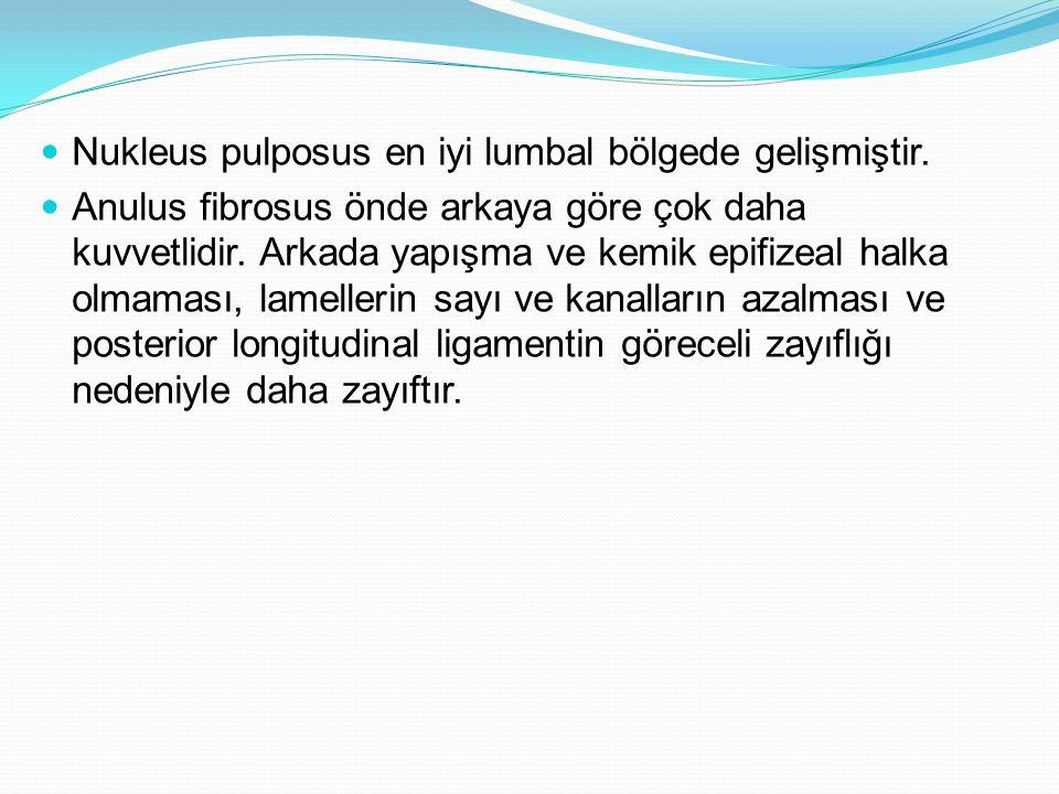 Nukleus pulposus en iyi lumbal bölgede gelişmiştir.