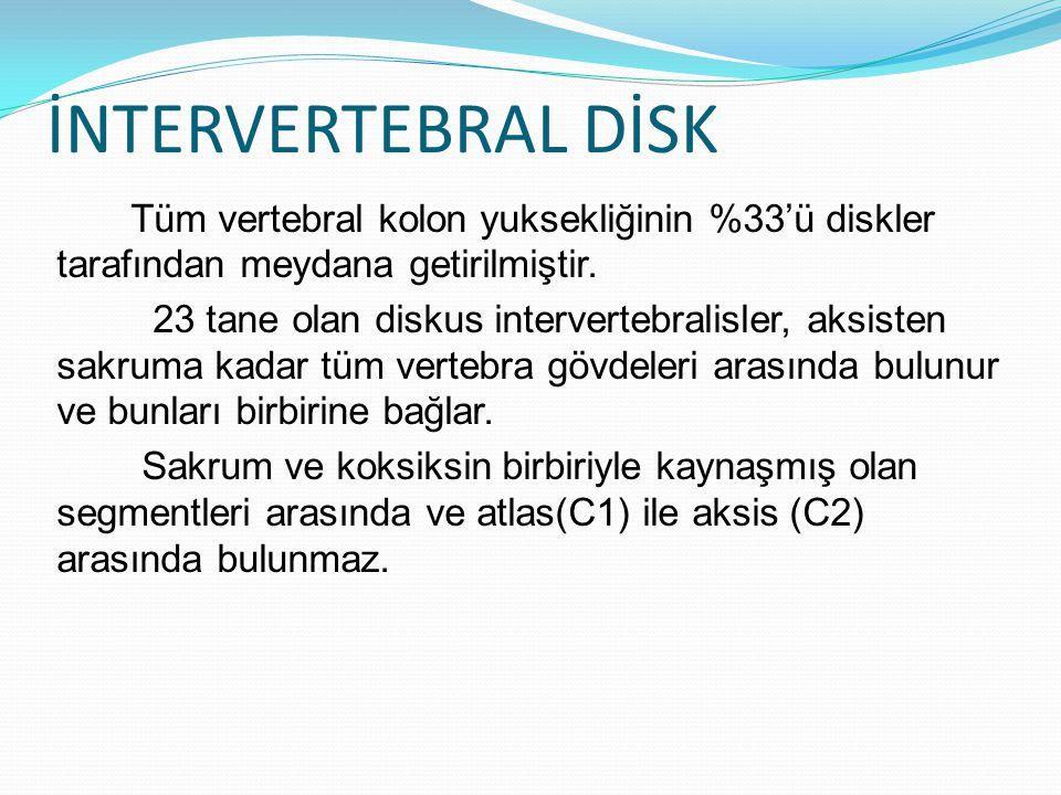 İNTERVERTEBRAL DİSK