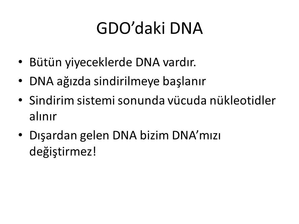 GDO'daki DNA Bütün yiyeceklerde DNA vardır.