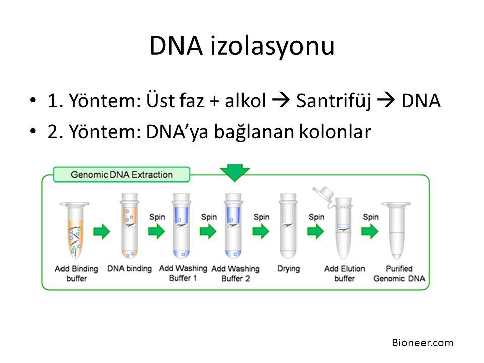 DNA izolasyonu 1. Yöntem: Üst faz + alkol  Santrifüj  DNA