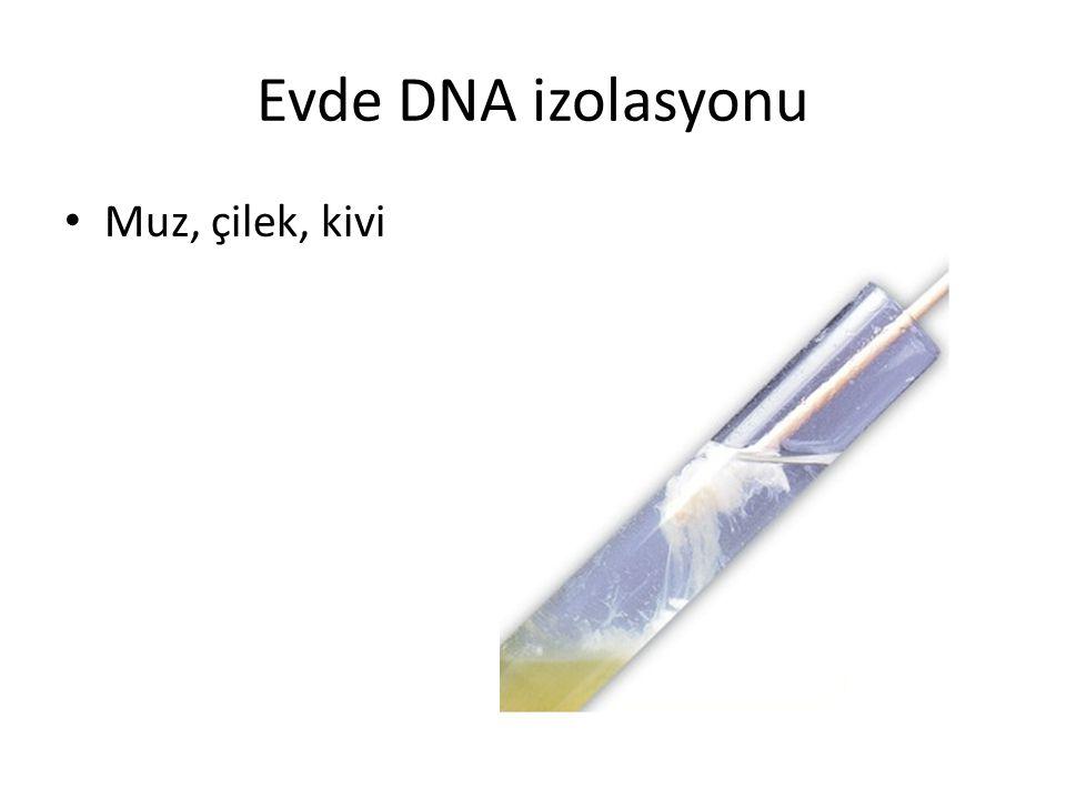 Evde DNA izolasyonu Muz, çilek, kivi