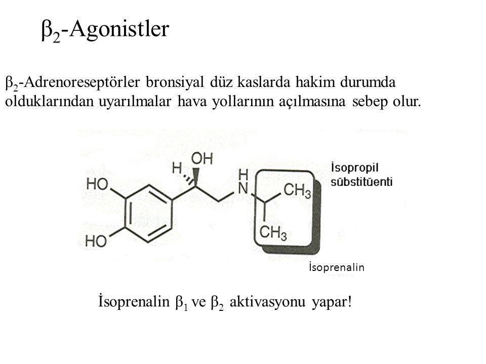 β2-Agonistler β2-Adrenoreseptörler bronsiyal düz kaslarda hakim durumda olduklarından uyarılmalar hava yollarının açılmasına sebep olur.